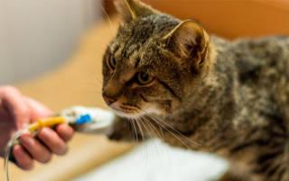 Симптоматические средства для кошек при мочекаменной болезни