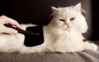 Коты шерсть уход