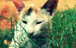 Болезни персидских кошек в старости