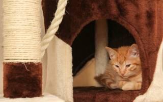 Идиопатический цистит у кошек лечение