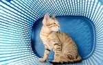 Мочевая болезнь у кошек