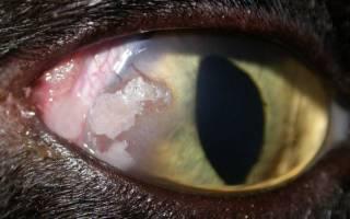 Кератит у кошек лечение препараты