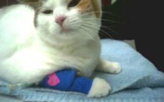 Вестибулярный синдром у кошек симптомы и лечение