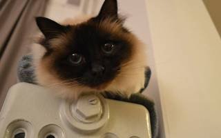 Аскариды у кота лечение