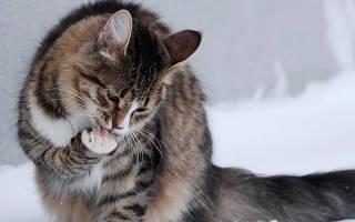 Кошку рвет чем лечить