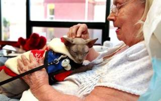 Кот лечащий хозяина