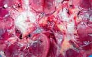 Нефроз почек симптомы и лечение у кошек