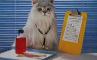 Как понять что кошка лечит