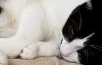 Кошки болезни живота