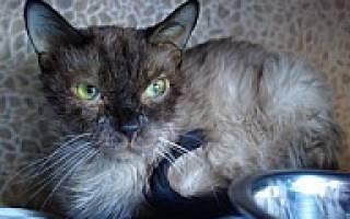 Изоспороз у кошек лечение