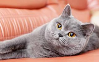 Кошка чихает причины и лечение