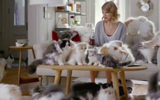 Болезнь много кошек