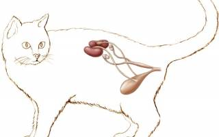 Питание кота при мочекаменной болезни