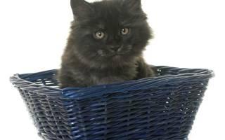 Как проявляется болезнь почек у кошек