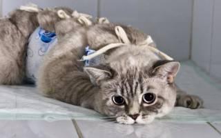 Лечение опн кошек