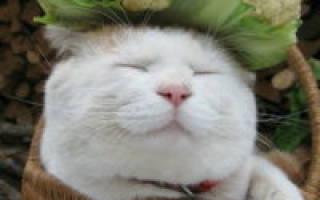 Сотрясение мозга у кошки лечение