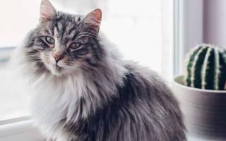 Лечение цирроза у кошек