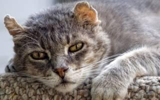Болезни кошек в старости