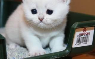 Кошка лечение мочеиспускание