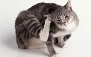 Паразиты у кошек виды симптомы лечение