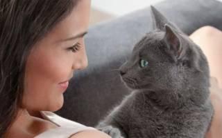 Болезнь кошек третий глаз