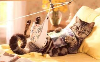 Вывих тазобедренного сустава у кошки лечение