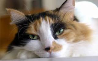 Живут ли коты с мочекаменной болезнью