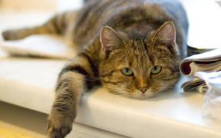 Кот после болезни