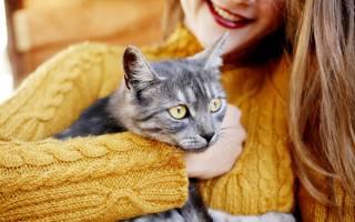Кошки умеют лечить