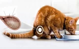 Пролит для лечения цистита у котов