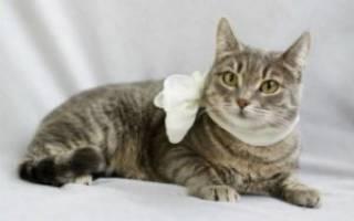 У кошки желтые выделения из матки лечение