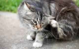 Атопический дерматит у кошек лечение
