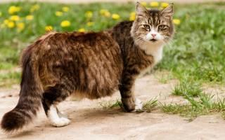 Болезни кормящей кошки