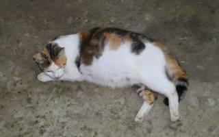 Свищ у кошек как лечить