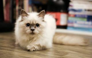 Стресс у кошек симптомы лечение