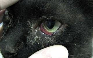 У кота болят глаза гной как лечить