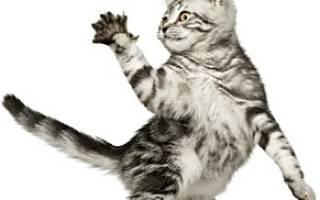 Царапины от когтей кошки чем лечить