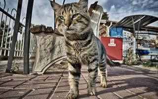 Болезни уличных котов
