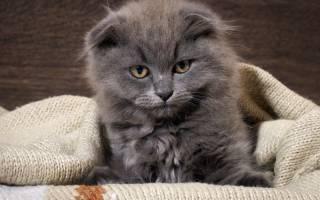 Песок у кота лечение