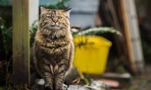 Как проявляется мочекаменная болезнь у кошек