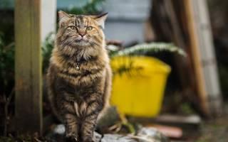 Поведение кота при мочекаменной болезни