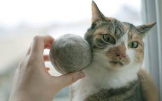 Слипается и выпадает шерсть у кошки болезнь