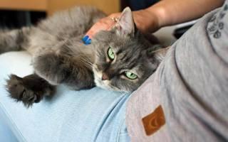 Хронический колит у кошек лечение