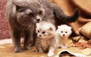Атаксия у кошек лечение