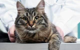 Болезни позвоночника у кошек