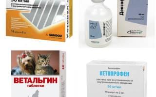 Обезболивающее для котов при мочекаменной болезни