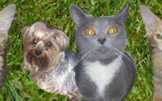 Испуг у кошки симптомы и лечение