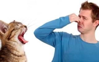 Кошка запах изо рта лечение