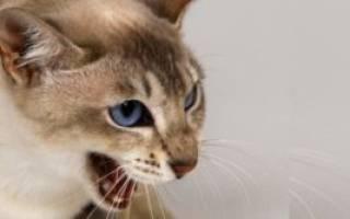 Лечение эпилепсии у кошек