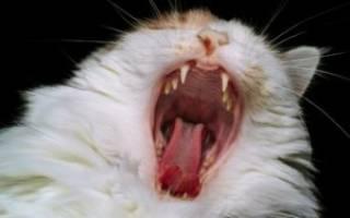 Перелом челюсти у кошек лечение
